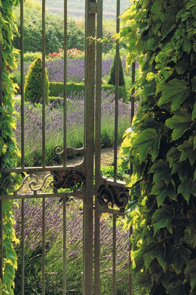 Na ilyen az, amikor a kertkapu a levendula mezőre nyílik :)