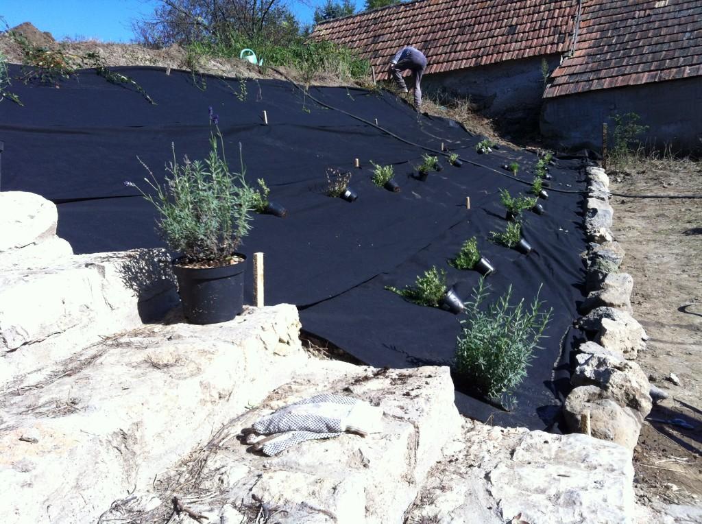 Növények a helyükre készítve, indulhat az ültetés.